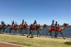 Camel tourism can be new addition for tourists visiting Perth