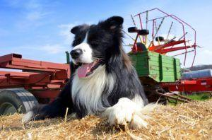 21 Things You Didn't Know About The 7 Dog Breed Groups
