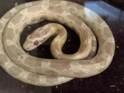 Man stunned to find slithery surprise inside new tea kettle