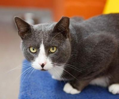 Kumar is 2 years old and was found as a stray. He's quite