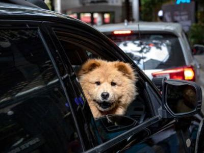 QOTD: How Do You Make Your Pets Comfortable In The Car?