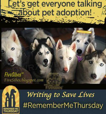 RememberMeThursday: Writing to Save Lives. Plus, Let's Meet A Few Beautiful Adoptables