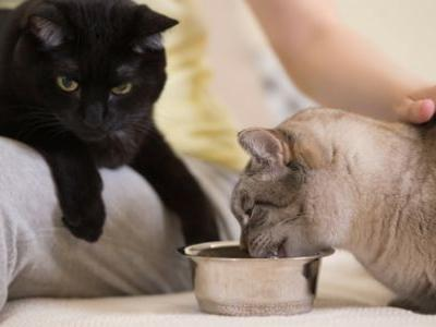 Cat Health Month: Because Cats Can't Take Care of Themselves!