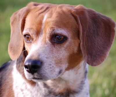 Elanco Bolsters Pet Products Pipeline With $234M Deal for Aratana