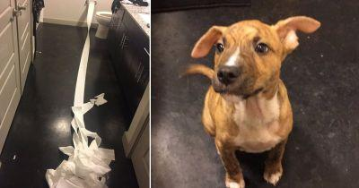 Very good dog tries to clean up his own mess with toilet paper