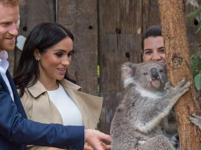 Prince Harry and Meghan Markle met a koala in Australia, and it was hilariously unimpressed