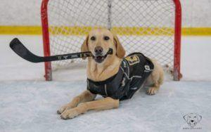 Ice Skating Rescue Dog Hopes To Go Pro With NHL Team