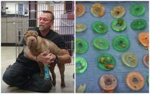 Shocking Discovery In Dog's Stomach Reminds Us: Some Dogs Will Eat Anything!