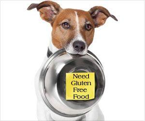 Pet Food With Raw Meat-Based Ingredients Could Be a Health Risk for Humans