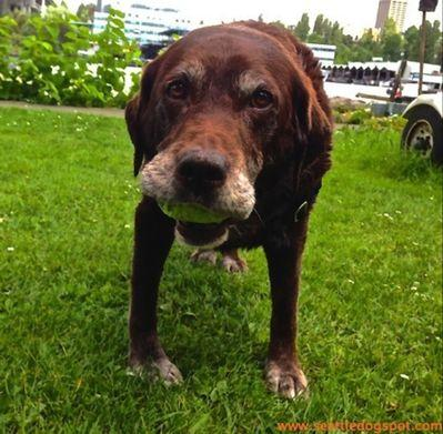 A Bittersweet Memorial Day with Our Old Dog