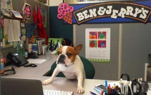 Why More Work Places Should Be Dog-Friendly