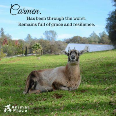 Think weed abatement is harmless to animals? Carmen lived on a