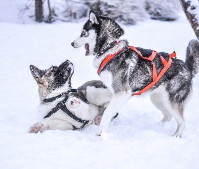 How to Keep Your Pet Healthy in the Wintertime | Winslow Animal Hospital Dog & Cat