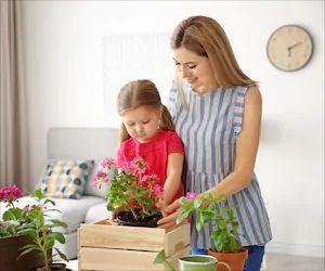 Amazing 5 Indoor Air Purifying Plants for Your Home, Office