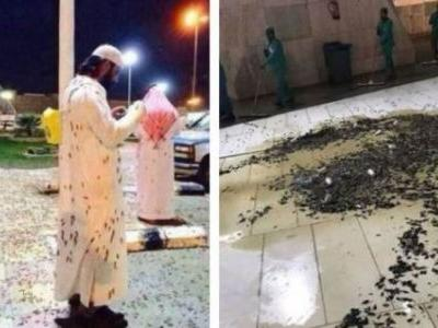 """Signs Of The Times? A Plague Of Locusts Hits Mecca And Earth's Magnetic Pole Is Experiencing A """"Sudden Shift"""""""