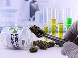 Synthetic cannabis may stop colorectal cancer from growing, study suggests