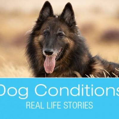 What Would You Do if It Was Your Dog: R.G. Hind End Lameness and Paralysis