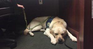 Police Dog Comforts Children While They Face Abusive Parents in Court