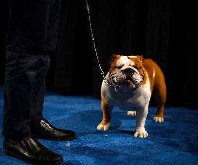 National Dog Show 2020: How to watch the Thanksgiving tradition