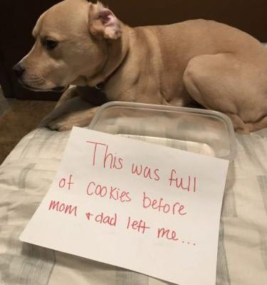 Cookie Plate VS Lonely Puppy