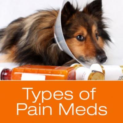 Pain Management: Types of Pain Medications for Dogs