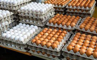 FDA wants Rose Acre Farm Inc. to clean up its NC shell egg farm