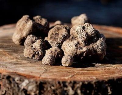 The Welsh farm growing one of the world's rarest delicacies - the Perigord truffle