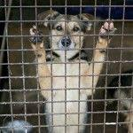 Factors Associated with High Live Release for Dogs at a Large, Open-Admission, Municipal Shelter