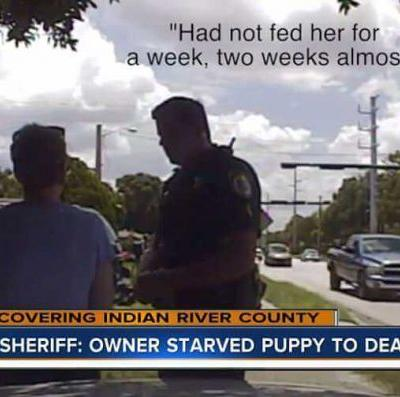 Woman Arrested After Letting Her Rottweiler Puppy To Death