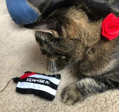Sundays With Tabs the Cat, Makeup and Beauty Blog Mascot, Vol. 485