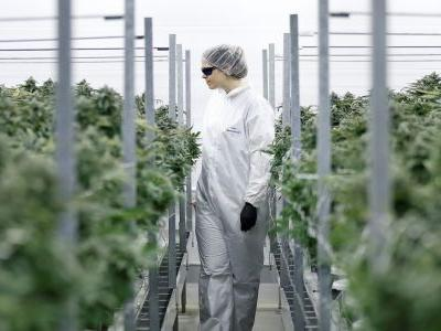 Weed stocks are going nuts after one of the largest marijuana companies strikes a deal for lab-made THC