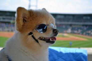 Vintage Baseball Card Featuring A Scruffy Dog Breaks Records At Auction