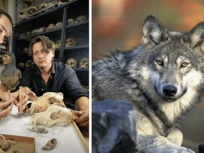 Archaeologists Discover The World's Oldest Domesticated Dog