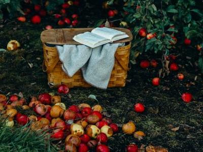 Hard Cider, Frontier Fables, and the True Story of Johnny Appleseed