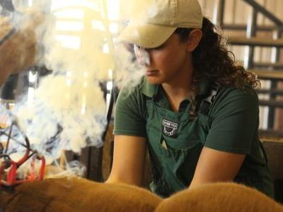 Shortage Of Rural Veterinarians Puts Farmers, Food Supply At Risk