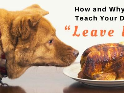 """How and Why to Teach Your Dog """"Leave It"""""""