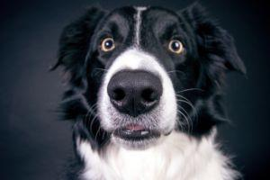 4 Facts About Dog Eyesight You Probably Don't Know
