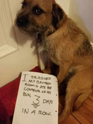 Dog-shaming:He put Himself in Time out