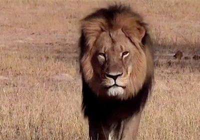 Cecil the lion 'suffered incredible cruelty' for 10 hours before he died, a new book claims