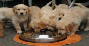 RECALL: Did Hill's Announce Another Dog Food Recall? Depends Who Is Asking!