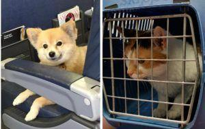 How To Safely Travel By Airplane With Your Pet