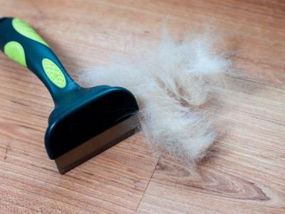 6 Dog Hair Removal Tips To Keep Your Home Dog Hair Free