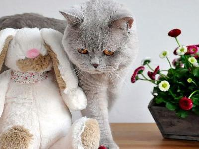 5 Easter Foods You Shouldn't Give To Your Pet