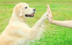 9 Expert Tips To Make Nail Trims Easier On Your Dog