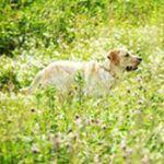 How Seasonal Allergies Affect Your Pet