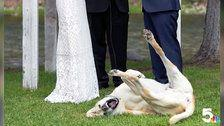Dog Photobombs Wedding And The Internet Falls In Love With Him
