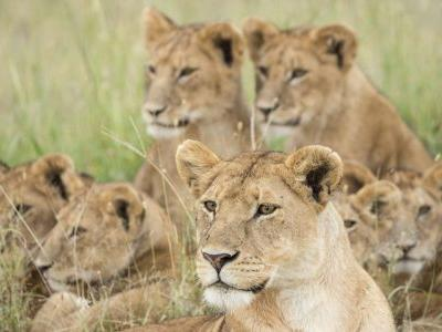 Wild at heart: 10 incredible African safaris you'll want to book now