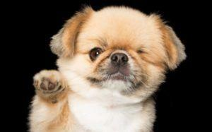 """Photographer Captures The Heart & Soul Of """"Perfectly Imperfect"""" Dogs"""