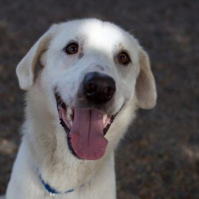 """ARCHIE"" ADOPTION OUTREACH Sat? - tall lanky good natured MYSTERY mix"