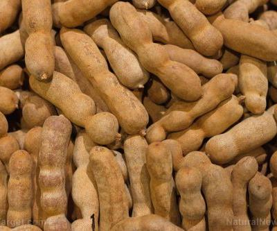 Tamarind, a tropical fruit used in traditional medicine, found to kill drug-resistant bacteria
